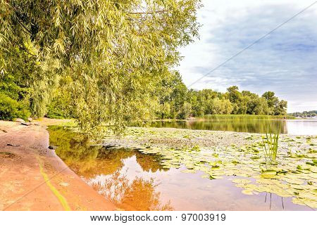 Willows, Typha Latifolia And Nuphar Lutea
