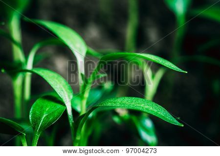 Green Sprout Growing From Dark Black Soil