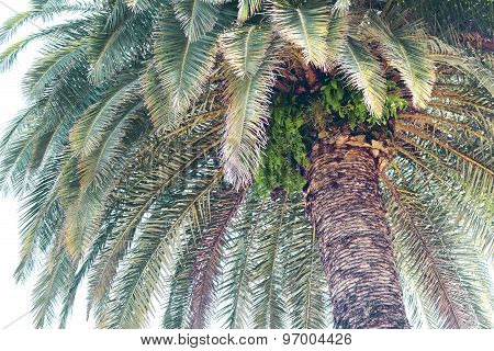 Tropical exotic palm