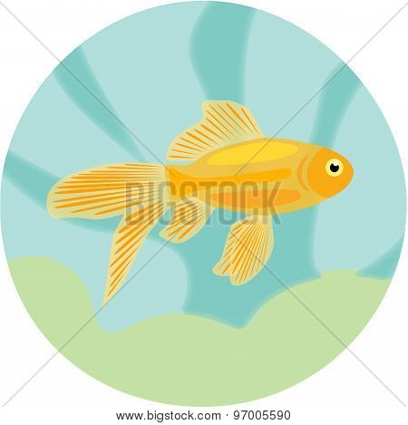 Aquarium fishes: highly detailed illustration of goldfish.