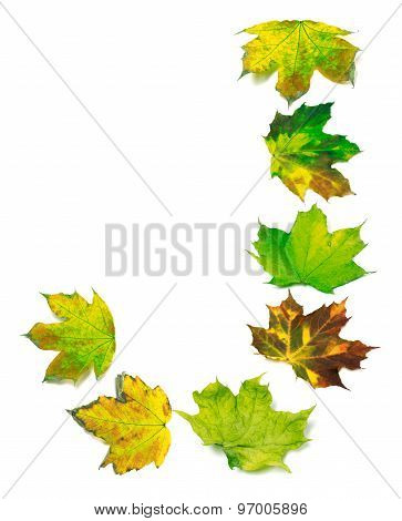 Letter J Composed Of Multicolor Maple Leafs