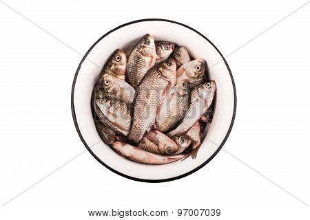 Crucian Carp In A Bowl