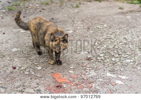 Cat getting ready to defend itself