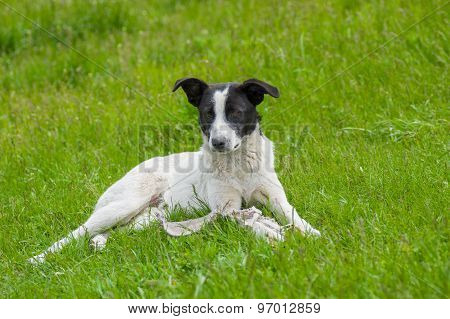 Stray dog lying in spring grass