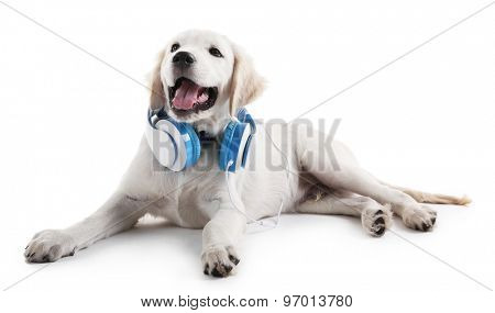 Cute Labrador dog with headphones isolated on white