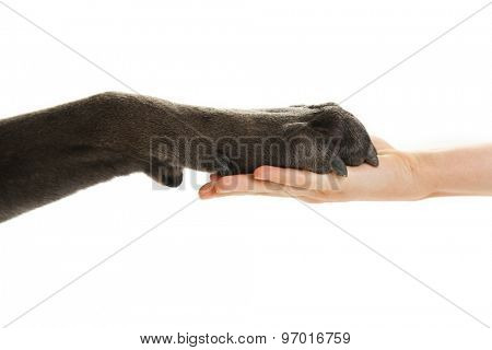 Dog paw and human hand, isolated on white