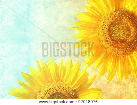 Texture of the old paper with sunflowers