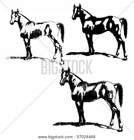 Arabian Horse, Stallion. Set Of Silhouettes.