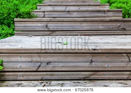 Wooden Staircase In The Woods Close Shot