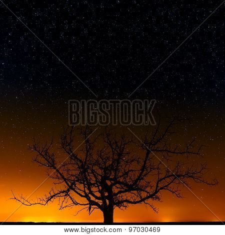 Tree On A Background Of The Night Starry Sky