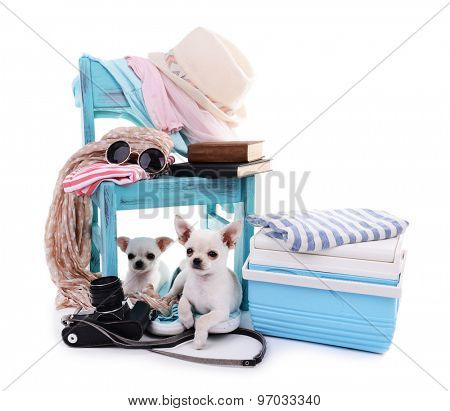 Adorable chihuahua dogs and heap of different things isolated on white