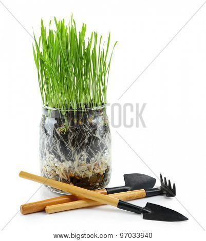 Green grass in transparent pot and gardening tools, isolated on white