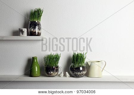 Transparent pots with fresh green grass on shelves