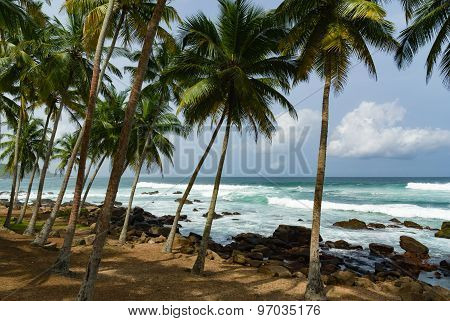 Rocky beach with coconut trees