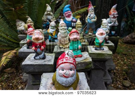 A Group Of Colorful Garden Gnomes