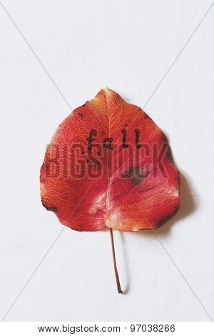 The Letters Fall Stamped On To A Red Autumn Leaf