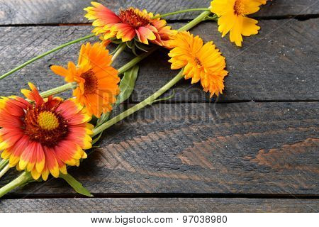 Bright wildflowers on wooden background
