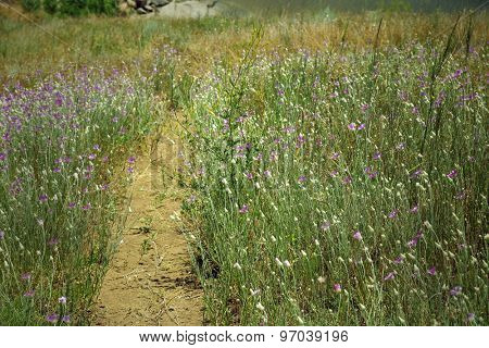 Path in field outdoors