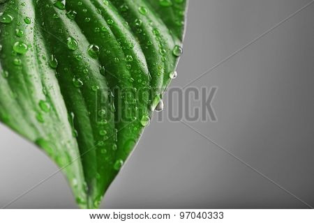Green leaf with droplets