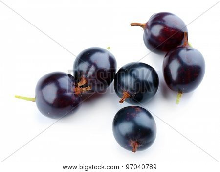 Wild black currant isolated on white