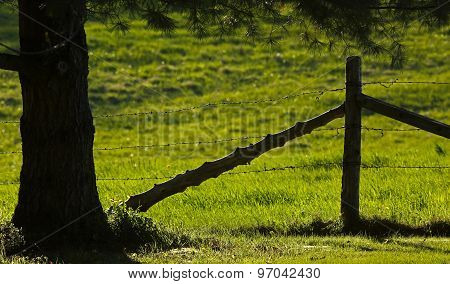 Rural Fence Tree Backlit Evening Sun