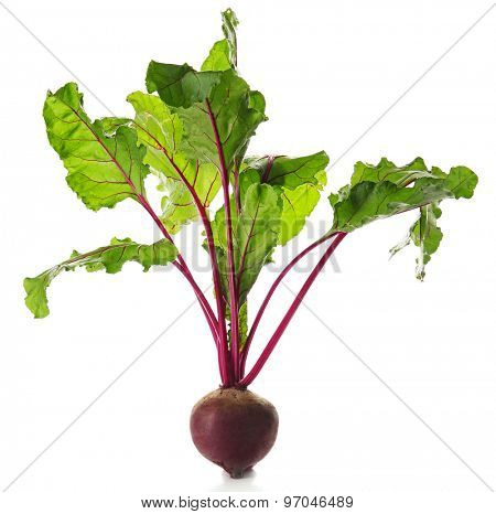 Young beet with leaves isolated on white