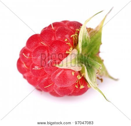 Ripe red raspberry isolated on white