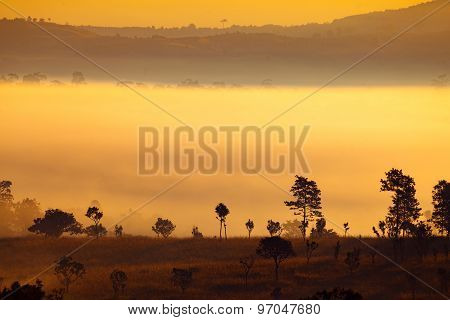 Fog in forest at Khao-kho Phetchabun,Thailand