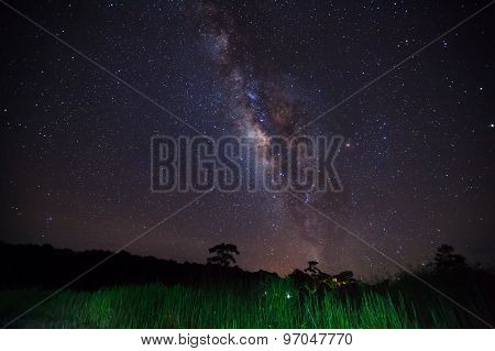 Silhouette Of Grass With Cloud And Milky Way. Long Exposure Photograph.