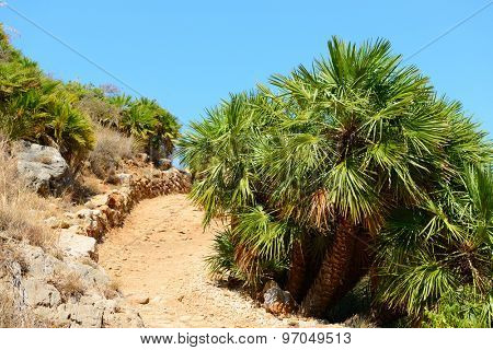 Landscape with mountain, tropical trees and earth road, Italy, Sicily, San Vito Lo Capo. Nature reserve Zingaro.