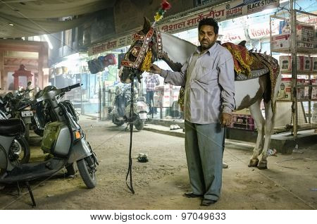 JODHPUR, INDIA - 07 FEBRUARY 2015: Horse trainer standing in street holds horse decorated in traditional Indian style before taking it to wedding. The horse is used in bride-grooms wedding procession.