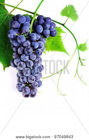 Cluster Fresh Grape