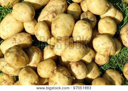 New potatoes, closeup