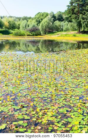 Lake with yellow water lilies