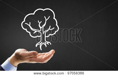 Close up of businessman hand holding drawn tree sign
