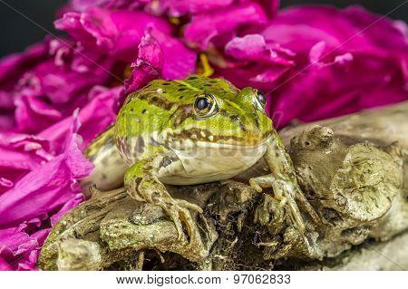 Frog Branch