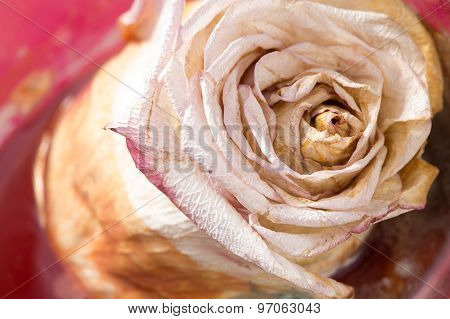 dried roses with background closeup