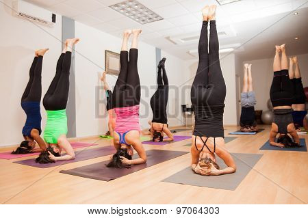 Large Yoga Group Doing A Headstand