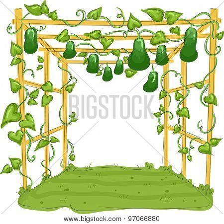Illustration of a Garden with Gourds Hanging from Trellises