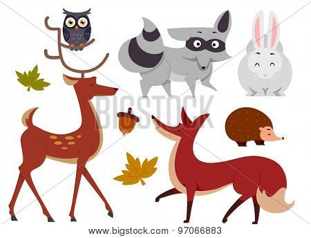 Illustration of Animals Commonly Found in the Woods