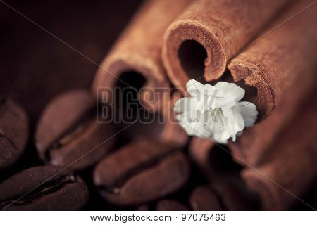 Coffee Beans With Cinnamon