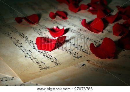 Beautiful rose petals on music sheets, closeup