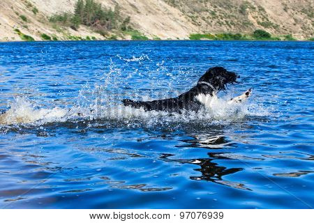 Training a hunting dog on the water.