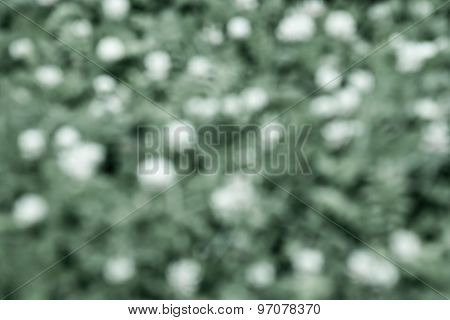 Blur Spotty Background Of Green White Color
