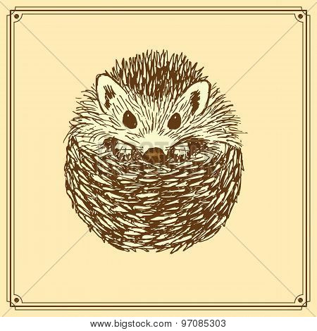Sketch Cute Hedgehog In Vintage Style