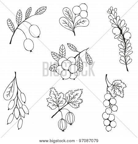 Berries sketch seamless pattern. Vector illustration