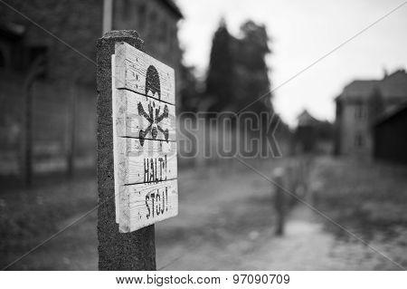 skull in Auschwitz