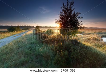 Misty Sunrise On Marsh In Summer
