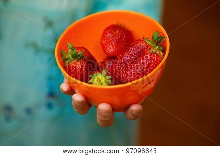 Woman Holding Strawberries. Red Fruit in woman hand