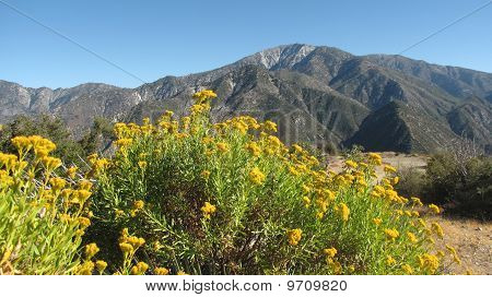 Flowers and Mt. Baldy